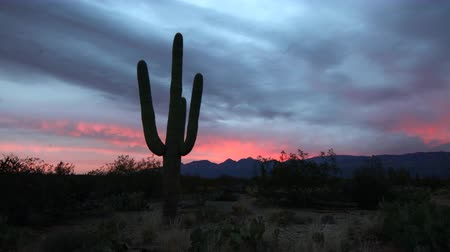 západ : 4K UltraHD Timelapse of the Sonoran Desert at sunset