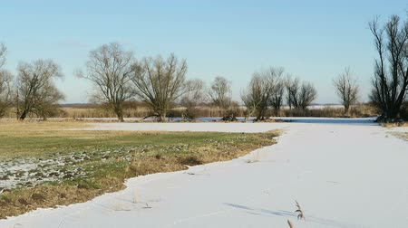 nutria : Havel river chanal with footprints of river nutria in snow. (Havelland, Germany)