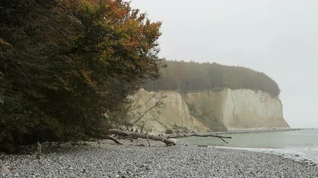 chalky : Rugen island chalk rock cliff landscape in autumn time. colorful beech tree forest. (Mecklenburg-Vorpommern, Germany). Baltic sea