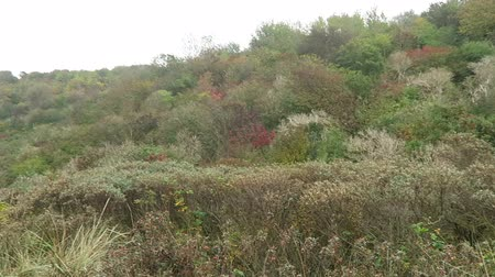 thornbush : Landscape of Hiddensee island coast (Mecklenburg-Vorpommern, Germany). Autumn time with colorful leaves. Stock Footage