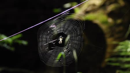 had : round spider web with spider