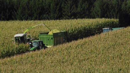 agronomie : Corn harvest with harvester and tractor