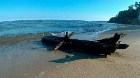 que vale a pena : driftwood in the Baltic sea Stock Footage