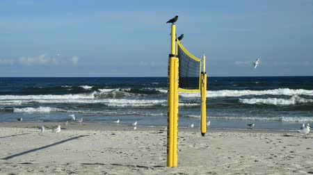 que vale a pena : Beach volleyball court with net on a beach