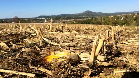 colhida : harvested corn field with mountain in the background