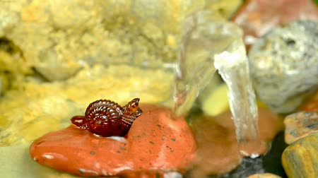 fosilní : Amber snail at a small well
