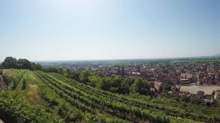 vosges : Obernai, medieval city in Alsace, France, with vineyard and city view