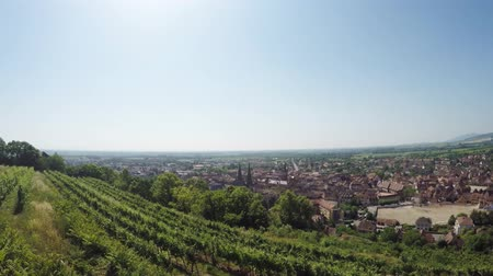 idil : Obernai, medieval city in Alsace, France, with vineyard and city view