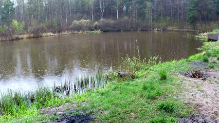 salamura : small lake in a moor reserve in Poland Stok Video