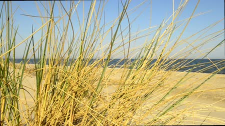 vaga : Beach of the Baltic Sea with beach grass