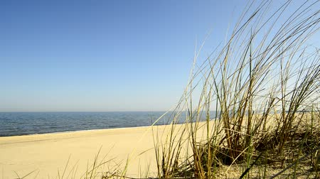 que vale a pena : Beach of the Baltic Sea with beach grass