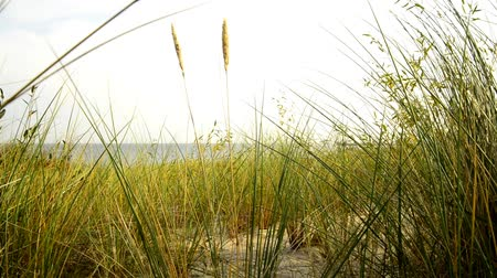 dalgakıran : Beach of the Baltic sea with beach grass and wind