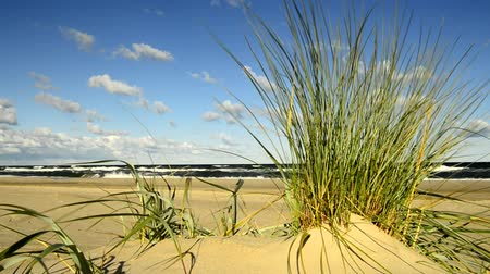 poland : Beach of the Baltic sea with beach grass and wind