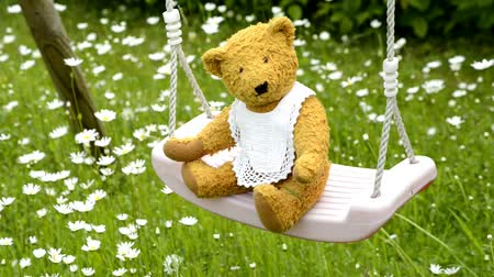 idil : home made teddy on a swing in a garden with marguerites in spring Stok Video