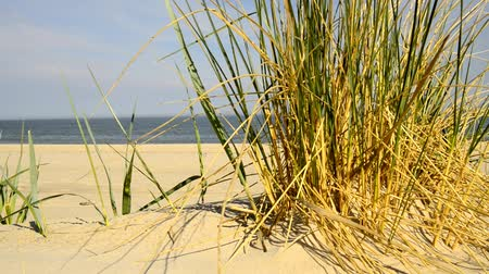 vaga : Beach of the Baltic sea with beach grass, wind and Baltic sea in the background