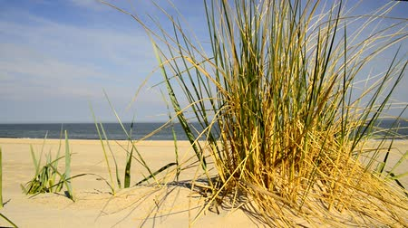 lápide : Beach of the Baltic sea with beach grass, wind and Baltic sea in the background