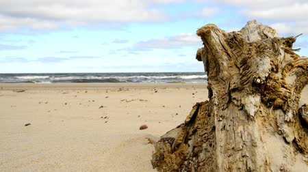 driftwood : Driftwood at a beach of the Baltic sea with strong surf Stock Footage