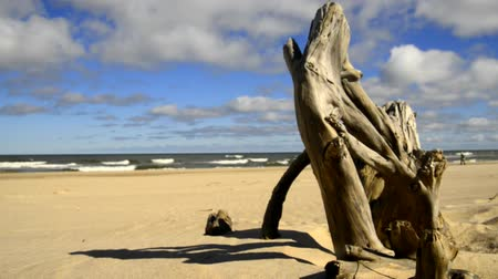 surfovat : Driftwood at a beach of the Baltic sea with strong surf Dostupné videozáznamy