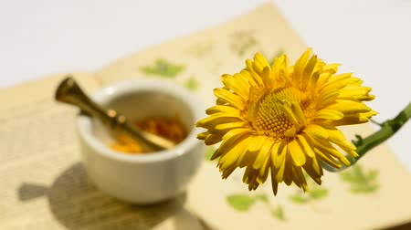 calendula officinalis : Common marigold, medicinal plant with flower and mortar in the background Stock Footage
