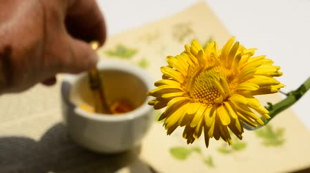 english marigold : Common marigold, medicinal plant with flower and mortar, hand squeezing flower petals