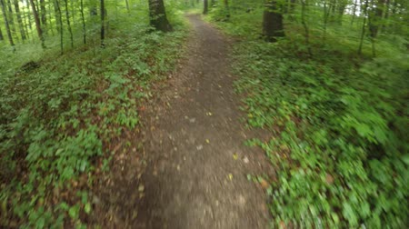 nearly : Running through a green, wet forest in Summer in Germany