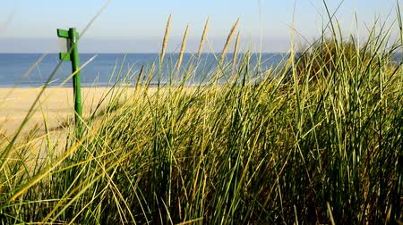 baltık denizi : Beach of the Baltic sea with beach grass
