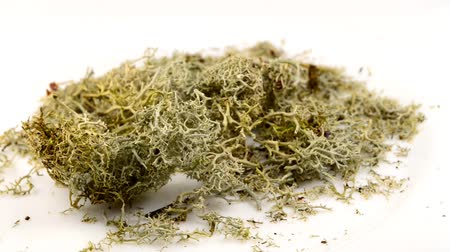 homeopatia : Iceland moss on a turn table
