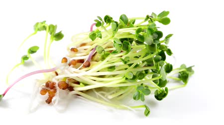 daikon radish : Radish sprouts on a turn table