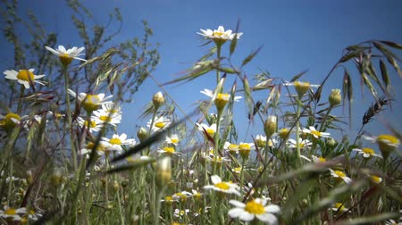 ouvido : Wild steppe flowers can be heard in the wind Vídeos