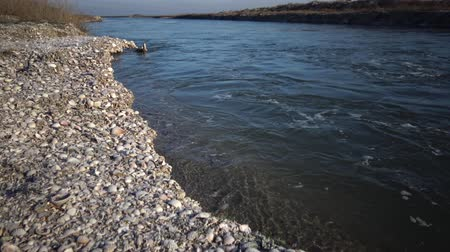 çakıl : the water washed the shore. fast flow. seashells on the shore Stok Video