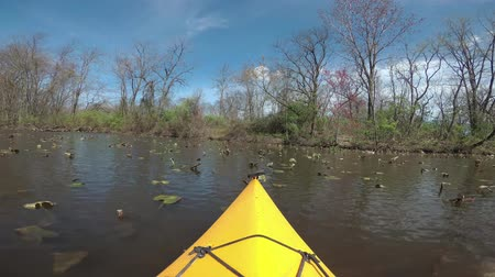 каноэ : Floating on the lake kayak, a lake overgrown with aquatic plants, a water lily, Canadian geese and turtles on the lake. Karnegy Like, NJ USA