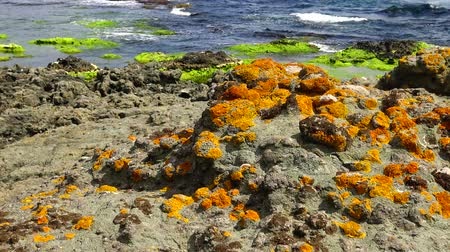 algi : Lichens on a rocky shore near the water on the Black Sea, Bulgaria