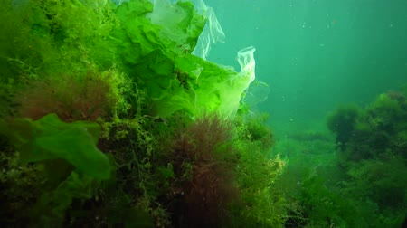 algler : Algae of the Black Sea. Green and red algae on the rocks on the seabed. Underwater landscape. Black Sea