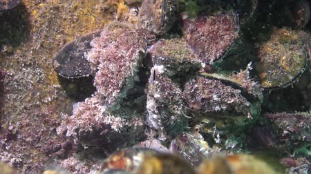 ölen : Dying mollusks on the bottom of the sea. Ecology of the sea, water pollution