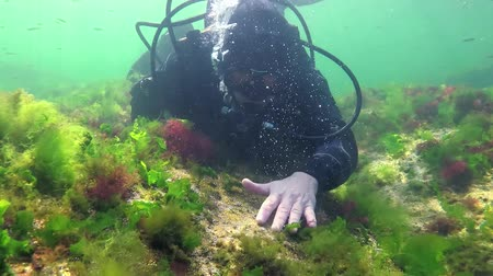 ekolojik : Photosynthesis in the sea, A diver touches oxygen bubbles synthesized by algae. Green and red algae on underwater rocks (Enteromorpha, Ulva, Ceramium, Polisiphonia). Gulf of Odessa, Black Sea Stok Video