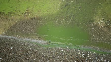 Eutrophication, environmental problem. Mass development of the blue-green alga Microcystis aeruginosa