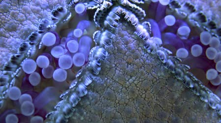 deep learning : Starfish, macro view of the bottom of the aquarium