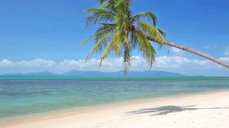 strand : tropical beach and palm tree