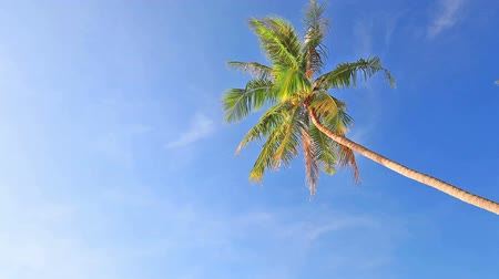 тропический : tropical beach and palm tree