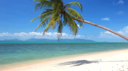 paraíso : tropical beach and palm tree