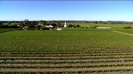 winnica : Aerial footage of vineyards and historic church in Barossa Valley. Featuring rows of vines and grapes. Wideo