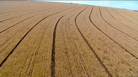 sojový : Aerial footage of dry brown rural crop fields and harvests featuring rows of crops, seeding, cropping rows in rural Australia.