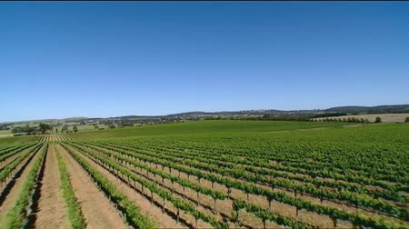 winnica : Aerial footage of winery vineyards featuring rows of vines and grapes. Filmed barossa valley, clare valley, Coonawarra, Hunter Valley, McLaren Vale areas. Vines in leaf before harvest. Low passes. Wideo