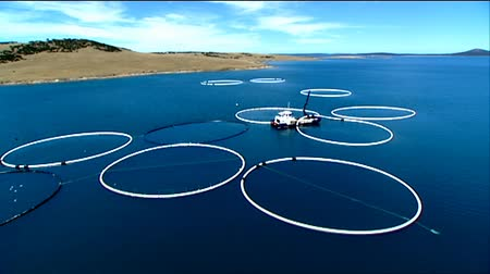 fishermen : Aerial footage of tuna farming, tuna nets, tuna rings in deep blue ocean areas. Stock Footage