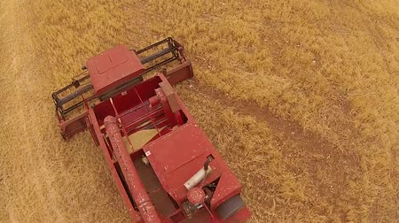 slashing : Aerial footage of vintage harvester, harvesting hay paddock in rows, around huge paddock in drought stricken dry land farming area of Australia and filling grain silo read for stock piling