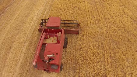 slashing : Overhead Aerial footage of vintage harvester, harvesting hay paddock in rows, around huge paddock in drought stricken dry land farming area of Australia and filling grain silo read for stock piling