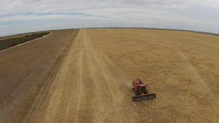 slashing : Aerial footage of crop harvesting hay paddock in rows, around huge paddock in drought stricken dry land farming area of Australia and filling grain silo read for stock piling