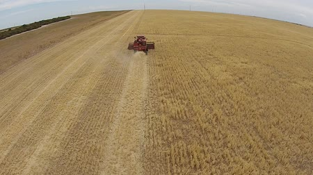 slashing : Aerial footage of vintage crop harvester, harvesting hay paddock in rows, around huge paddock in drought stricken dry land farming area of Australia and filling grain silo read for stock piling