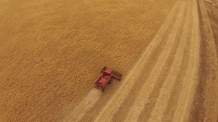 slashing : Aerial footage of vintage harvester, harvesting hay paddock in rows, around huge paddock in drought stricken dry land rural farming area of rural Australia and filling grain silo read for stock piling