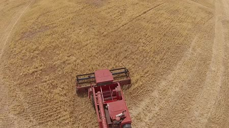 slashing : Aerial footage of harvester, harvesting hay paddock in rows, around huge paddock in drought stricken dry land rural farming area of rural Australia and filling grain silo read for stock piling
